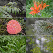 Foto Stock: Collage of drop of water on grass, flower, web, leaf,
