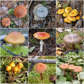 Collection of various woodland and forest mushrooms and toadstoo — Stock Photo