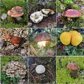Kolaż grzyby jadalne — Zdjęcie stockowe