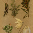 Vintage herbarium background on old paper — Stock Photo