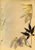 Old photo album and dried flower — Stock Photo