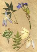 Vintage herbarium hintergrund auf altpapier — Stockfoto
