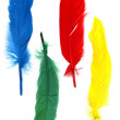 Background with colored feathers — Stock Photo