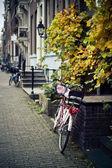 Lale ile bisiklet — Stok fotoğraf
