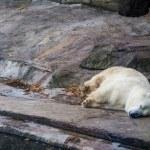 Polar beer cub — Stockfoto
