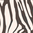 Zebra background - Stockfoto