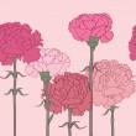 Carnations pattern — Stock Photo #44541093