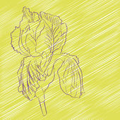 айрис цветок — Стоковое фото