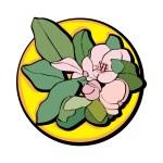 ������, ������: Apple flower clip art yellow