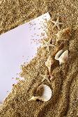 оболочки, песок & лист бумаги — Стоковое фото