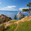 Baikal tree — Stock Photo