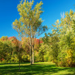 Stock Photo: Fall colors in park