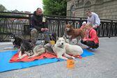 Collecte aide animale — Photo