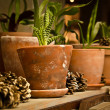 Indoor decoration of cones and plants — Stock Photo