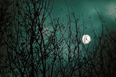Scary night scene in forest — Stock Photo