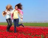 Two women in a red tulip field — Stock Photo