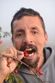 Man picking up wild rose hip — Stock Photo