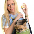 Vet using technology with a little dog - isolated over a white background — Stock Photo