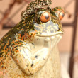 Funny frog — Stock Photo #23623265