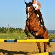 Stock Photo: Horse jumping show