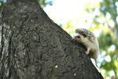 Little hedgehog climbs a tree — Stock Photo