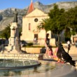pigeon drinking from the fountain in makarska — Stock Photo
