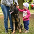 Little girl and German Shepherd dog — Stock Photo #31631881