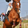 Horse at jumping competition — Stock Photo