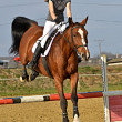 Horse at jumping competition — Stock Photo #34740127