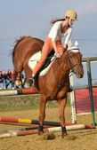 Horse at jumping competition — Photo
