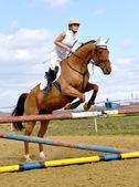 Cheval saut d'obstacles — Photo