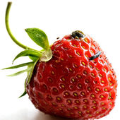 Small slug on a fresh strawberry — Stock Photo