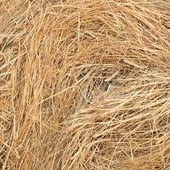 Dry grass, hay, — Stock Photo