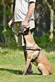 Výcvik psů — Stock fotografie