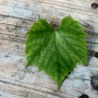 Stock Photo: Beautiful grape leaf