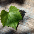 Beautiful grape leaf — Stock Photo #12300843