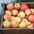 Stock Photo: Harvest of ripe apples and pears