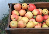 Harvest of ripe apples and pears — Stock Photo