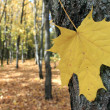 Autumn leaf — Stock Photo #13591328