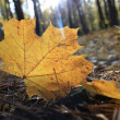 photo macro d'une feuilles tombées — Photo