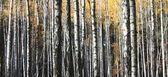 Podzimní stromy — Stock fotografie