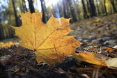 Makro fotografii spadaného listí — Stock fotografie