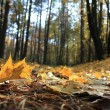 Macro photo of a fallen leaves — Stock Photo