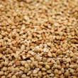 Buckwheat groats — Stock Photo #21146999