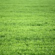 Green grass — Stock Photo #24728965