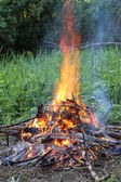 Campfire in the forest — Stock Photo