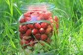 Glass jar with fresh ripe strawberries in a green grass — Stock Photo