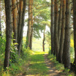 Pine Forest Road — Stock Photo #29691949