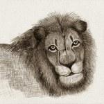 Lion (Sketch) — Stock Photo #19477731