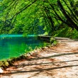 Path near a forest lake in Plitvice Lakes National Park, Croatia — Stock Photo #21743959